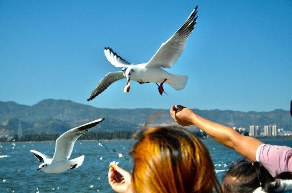 住在海地,丽江洱海一日游。